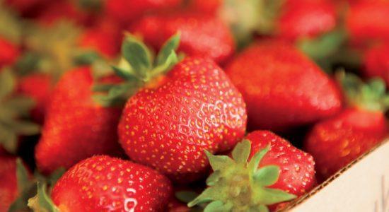 Ingram Strawberry Farm