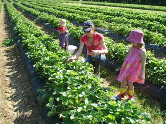 Early Farms Produce & Plants