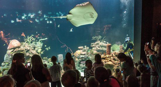 The Wiseman Aquarium at the Greensboro Science Center