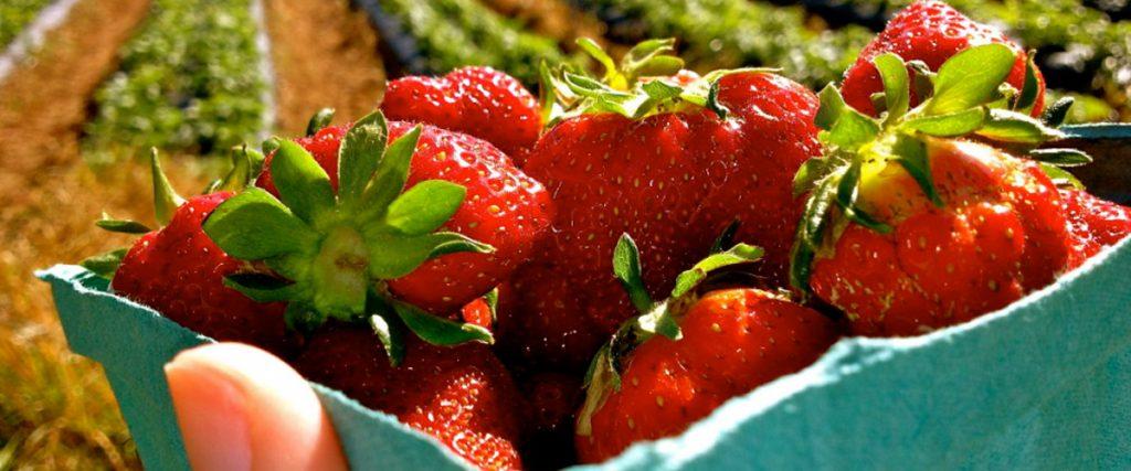 Rudd Strawberry Farm Greensboro Convention And Visitors Bureau