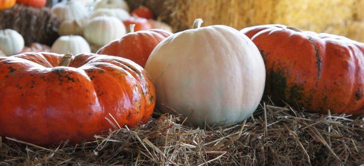 Pumpkins Piedmont
