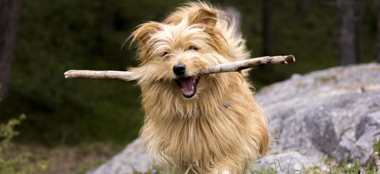 Dog Walk Blog