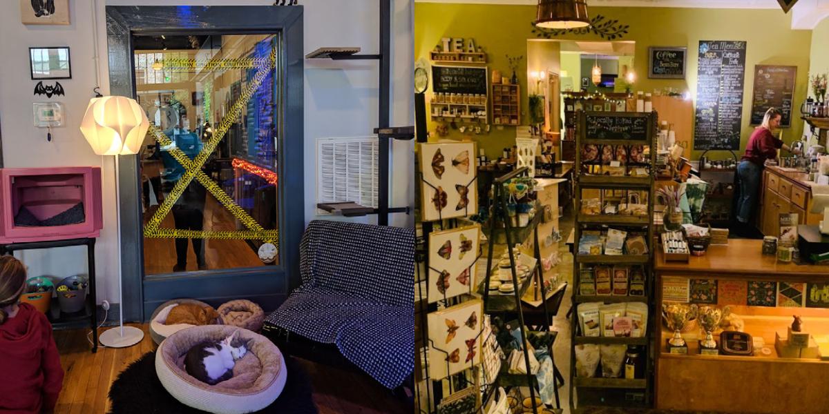 Pictured L: Crooked Tail Cat Cafe R: Vida Pour Tea